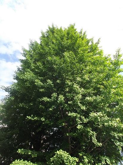 樹1884