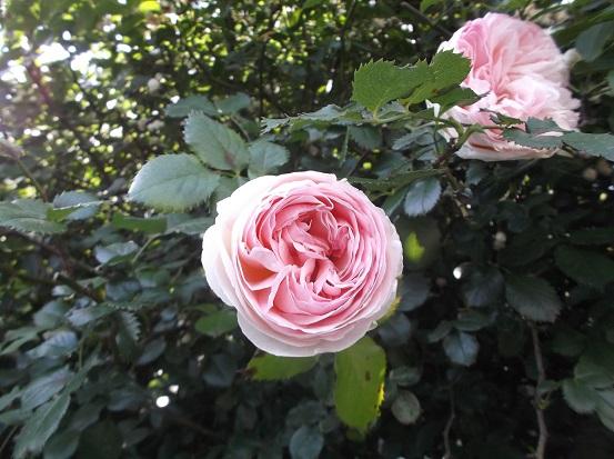 花1844