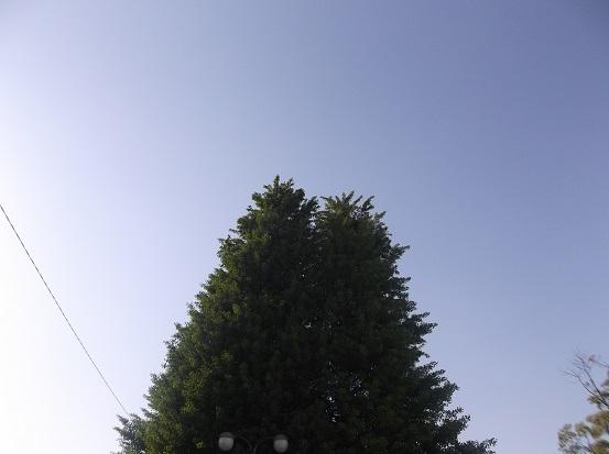 樹1852
