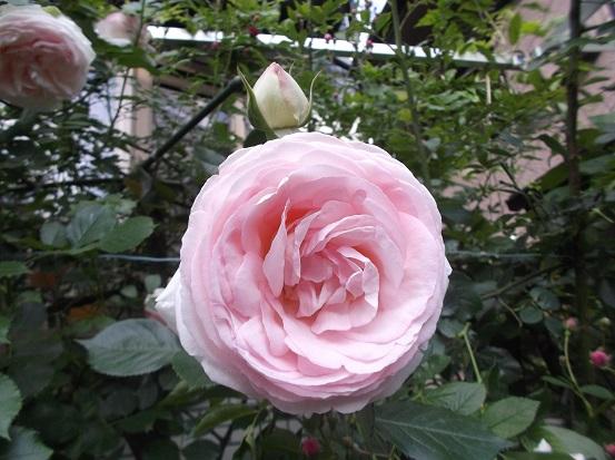 花1890
