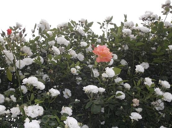 花1874