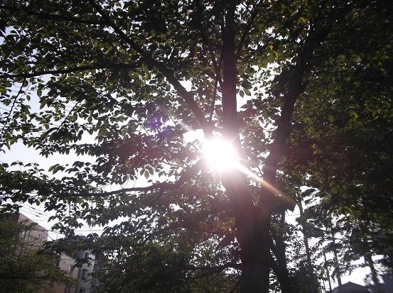 樹1664
