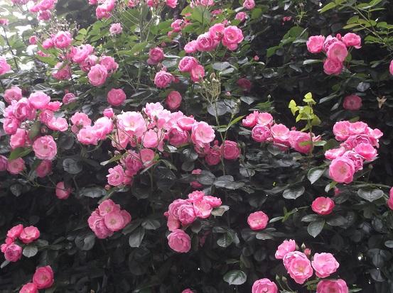 花1859
