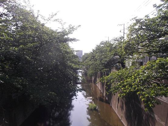 石神井川1811