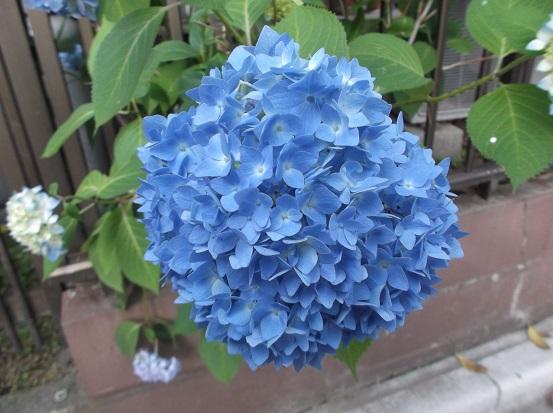 花1981