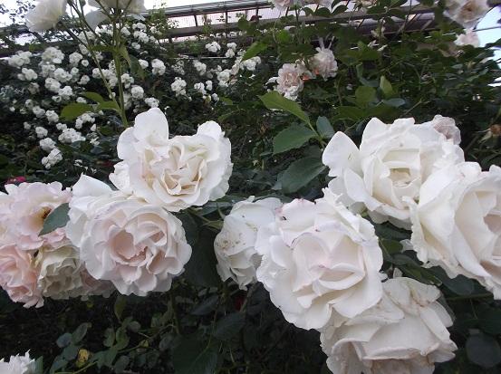 花1914