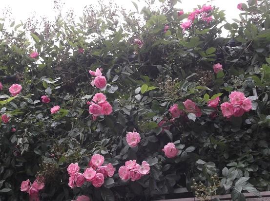 花1875