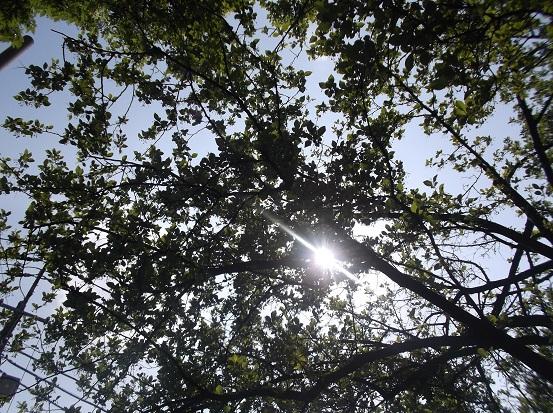 樹1626