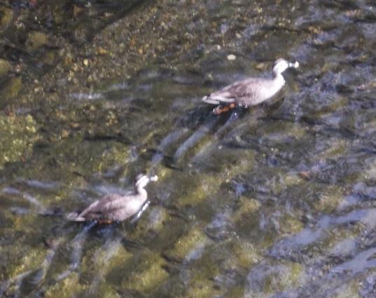 鳥1975