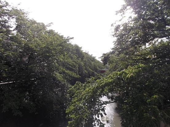 石神井川2009