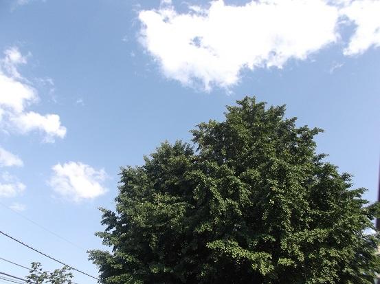 樹2063
