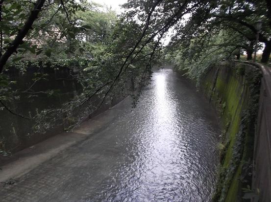 石神井川2024