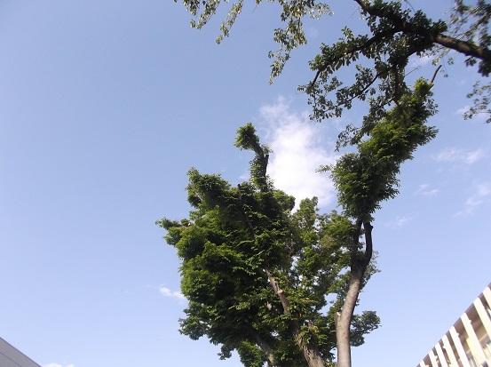 樹2068