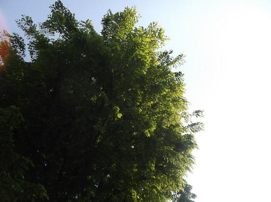 樹1686