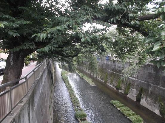 石神井川2108