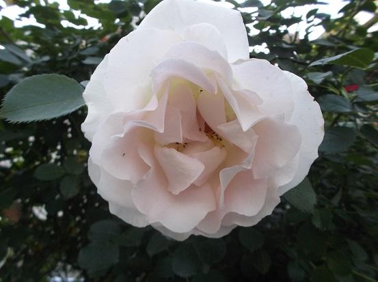 花1839