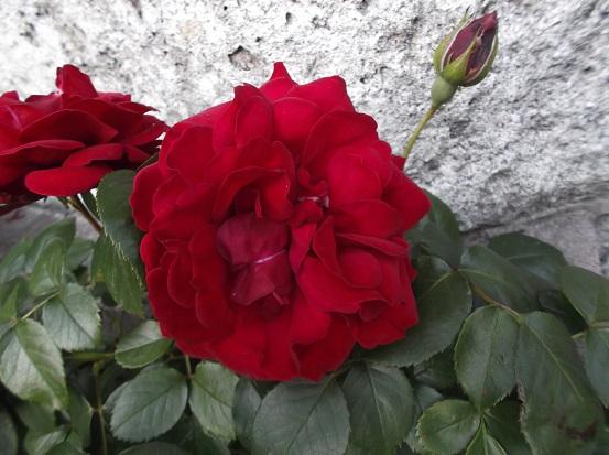 花1803