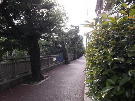 石神井川2079