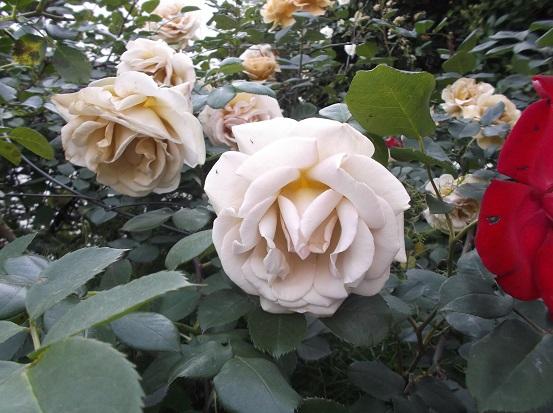 花1846