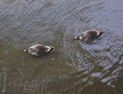 鳥1814