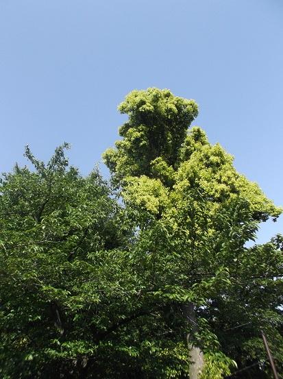 樹1851