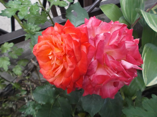 花1887