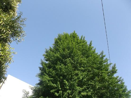 樹1853