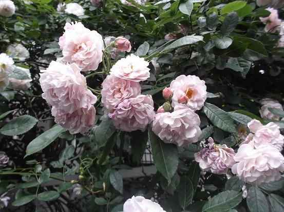 花1889
