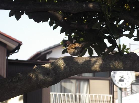 鳥1396