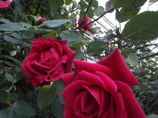花1841
