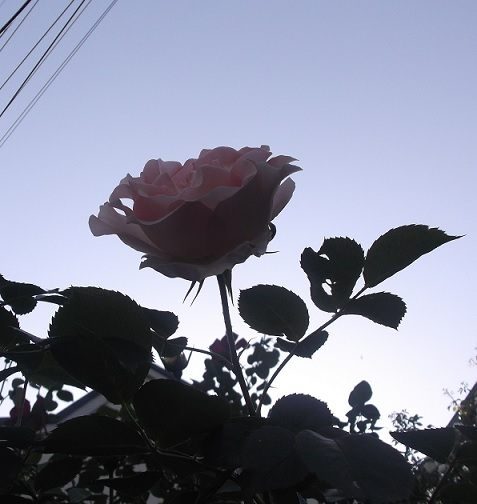 花1849