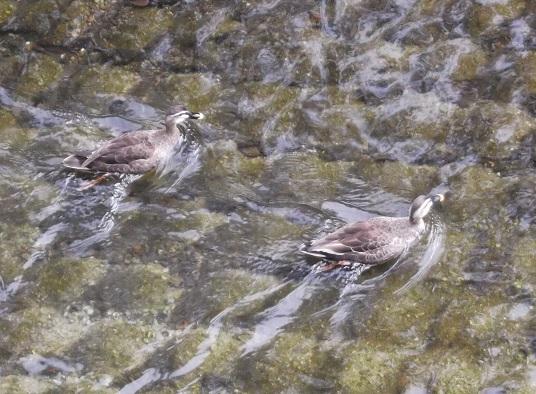 鳥1979