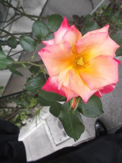 花1795