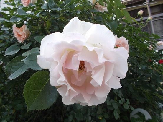 花1837