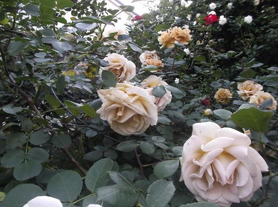 花1848