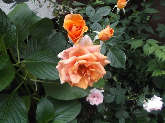 花1910