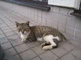 ローソン猫さん