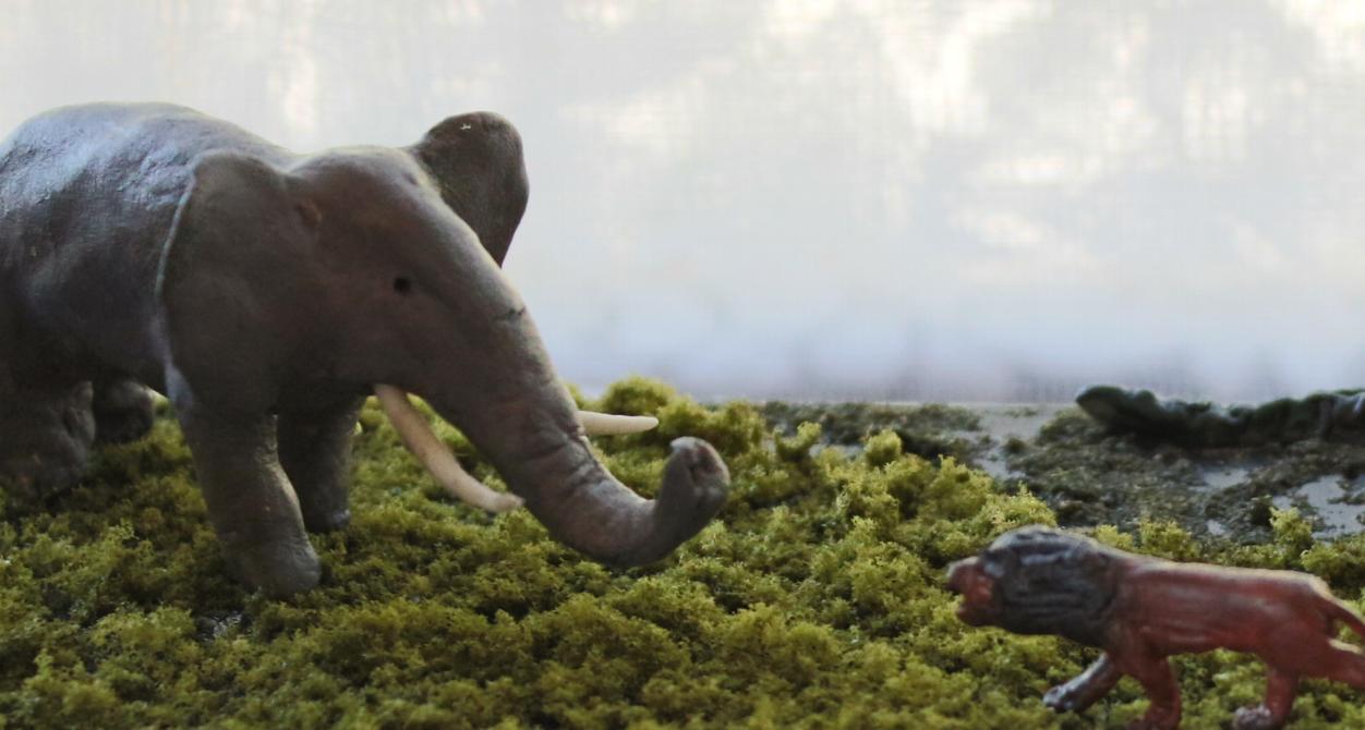 象とライオン 05