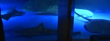サメさんたち。