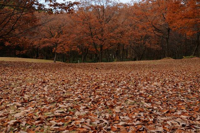 芸北の秋 3
