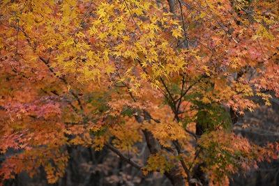 芸北の秋12