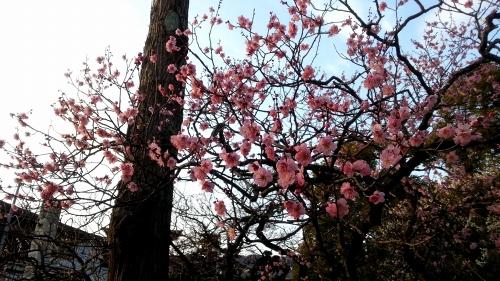 太宰府の美しい景色