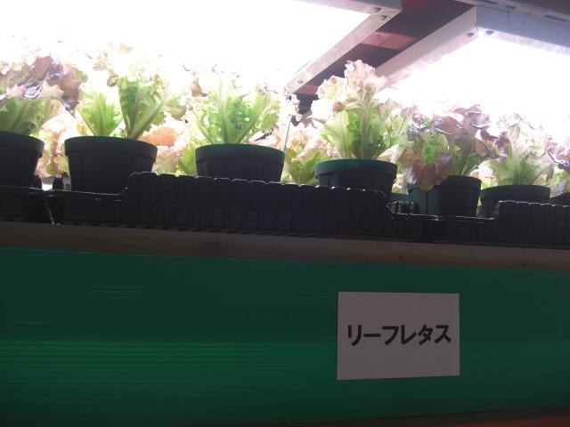 北浜野菜工房1