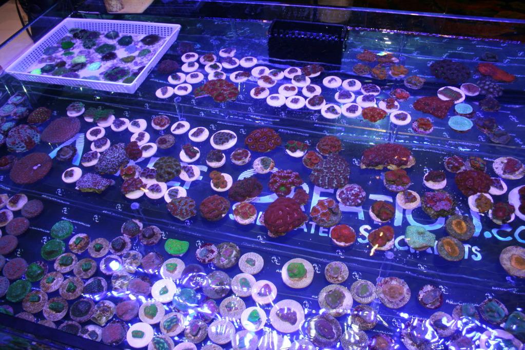 Coral-Frags-at-MACNA.jpg
