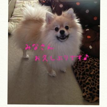 fc2blog_2014021920545956a.jpg