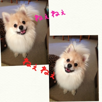 fc2blog_20140416204656632.jpg