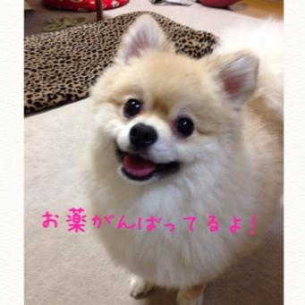 fc2blog_20140612211725e6f.jpg
