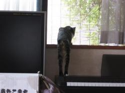 外に何かいる・・・