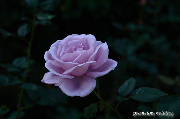 plum_8708__02.jpg