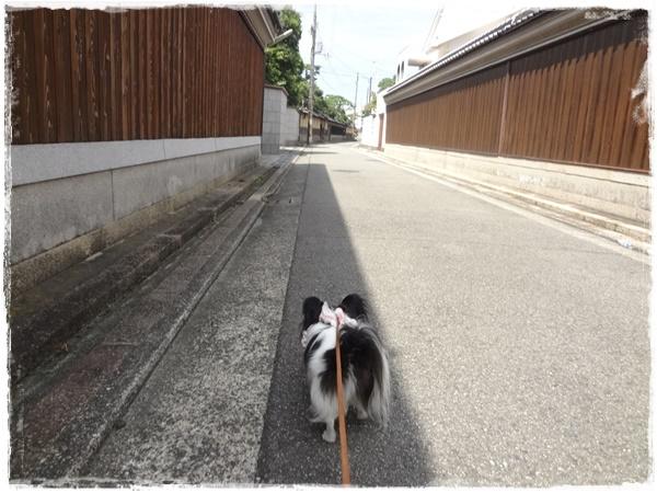 お散歩中3